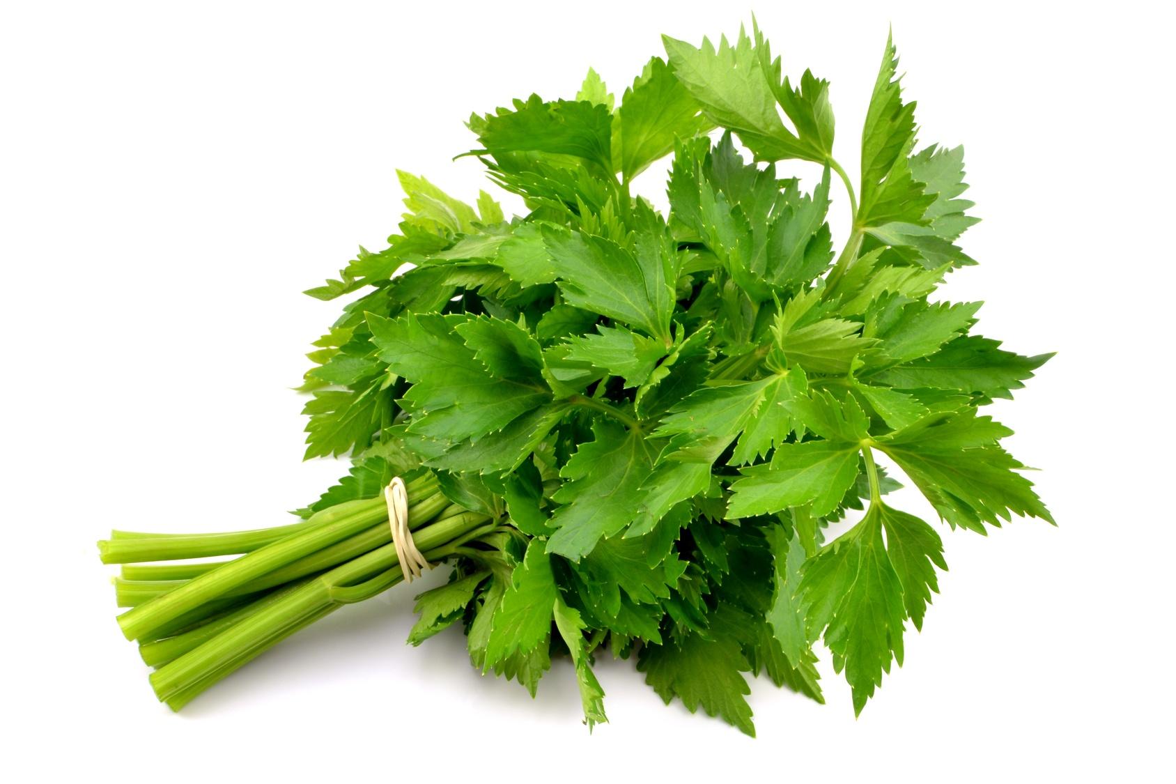 céleri-branche frais légume nutrition recette santé