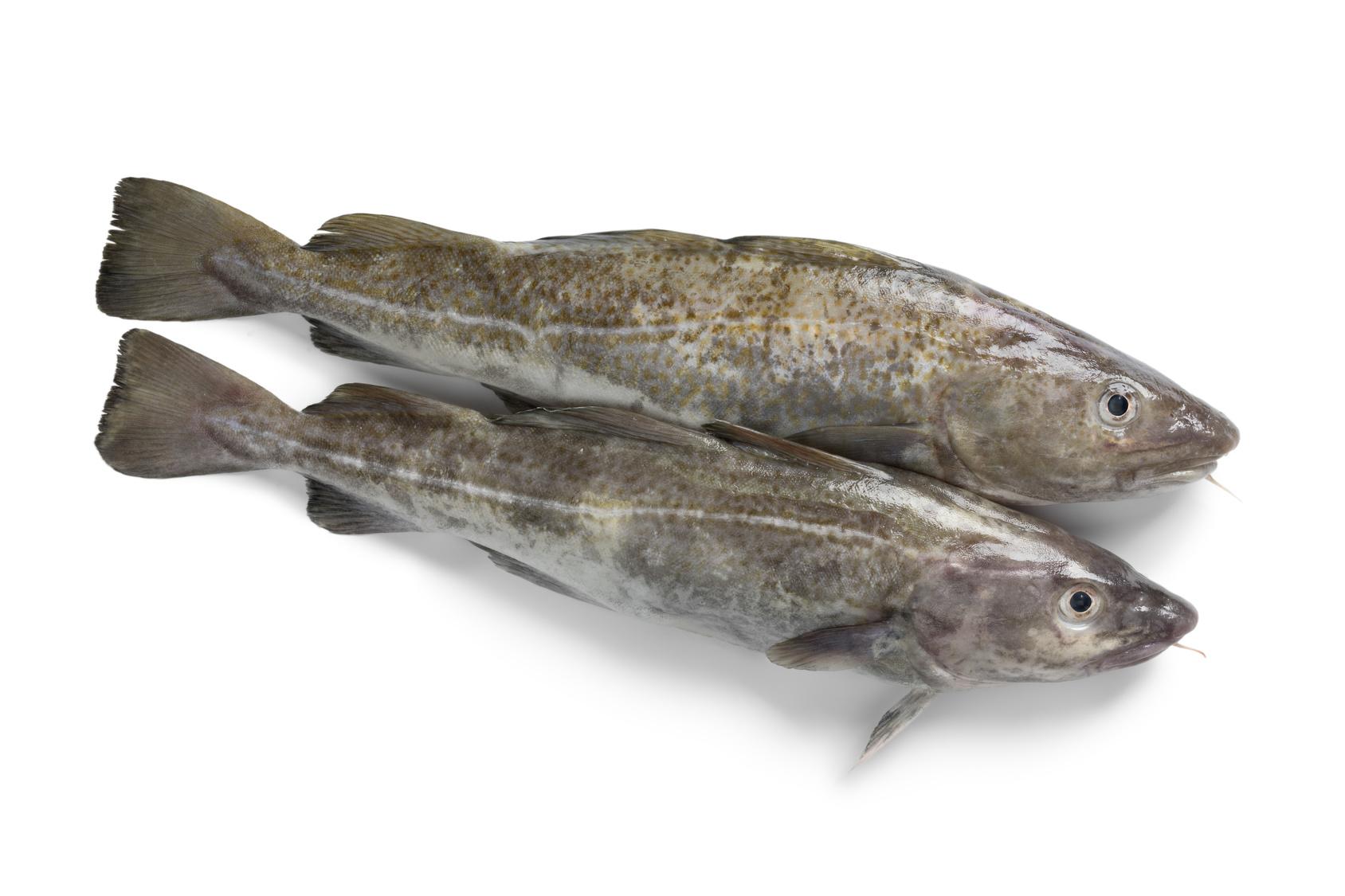 cabillaud fruit de mer recette nutrition santé