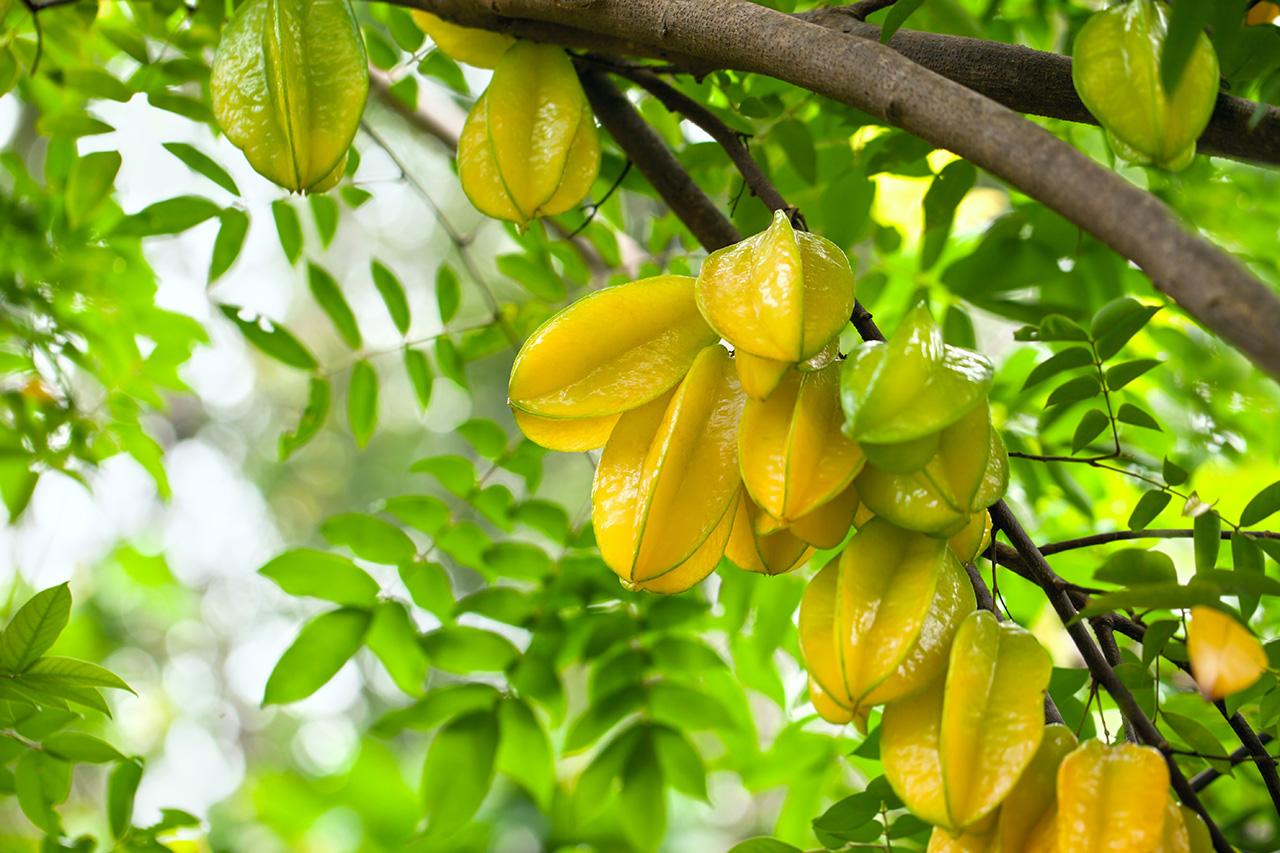 carambola fruit nutrition santé
