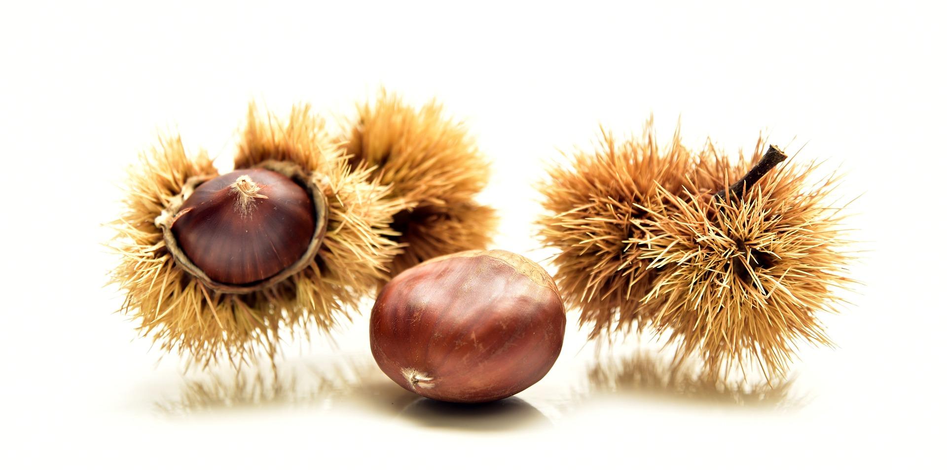 châtaigne fruit nutrition santé