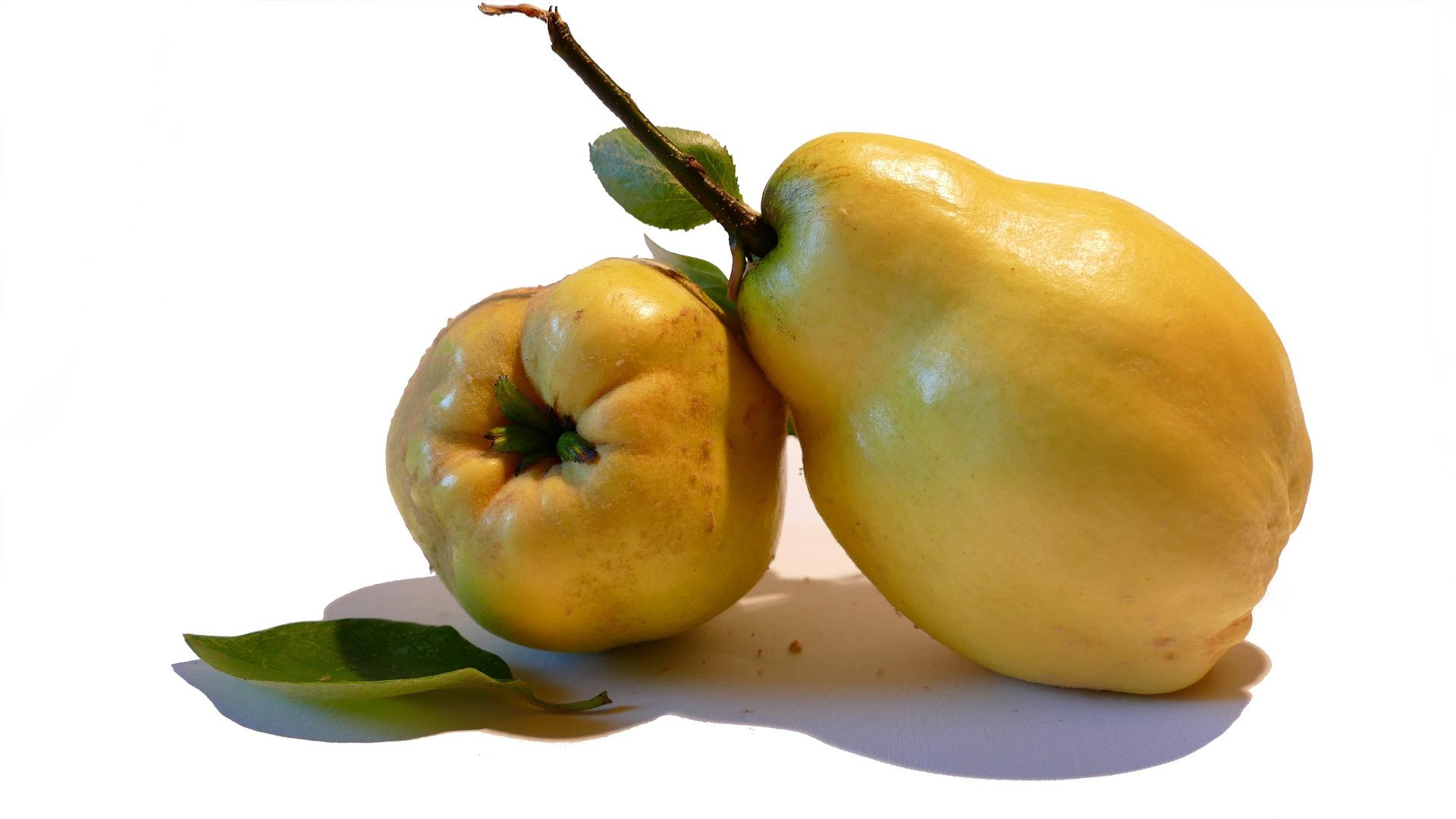 coing fruit nutrition santé