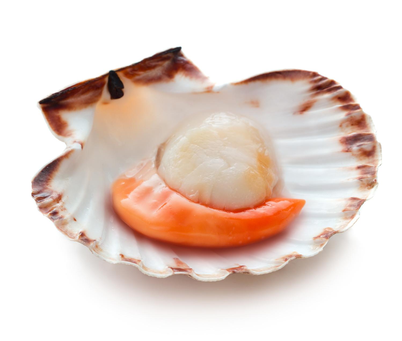 coquille saint-jacques fruit de mer recette nutrition santé