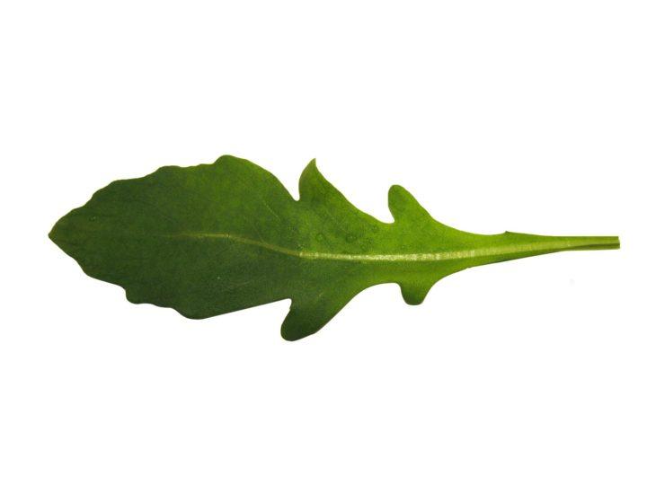 roquette salade nutrition santé
