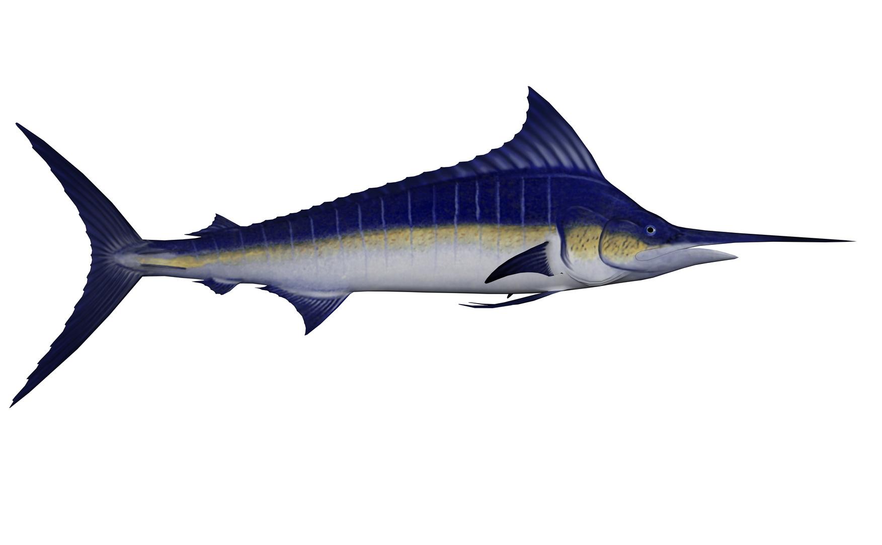espadon poisson nutrition recette santé