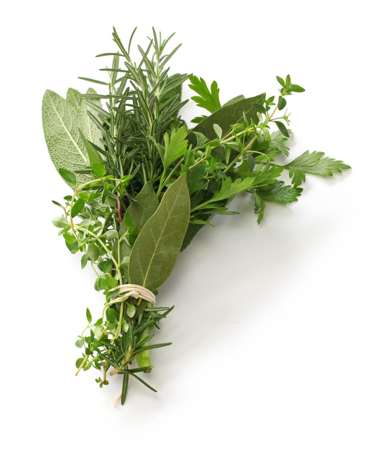 herbes aromatiques fraîches