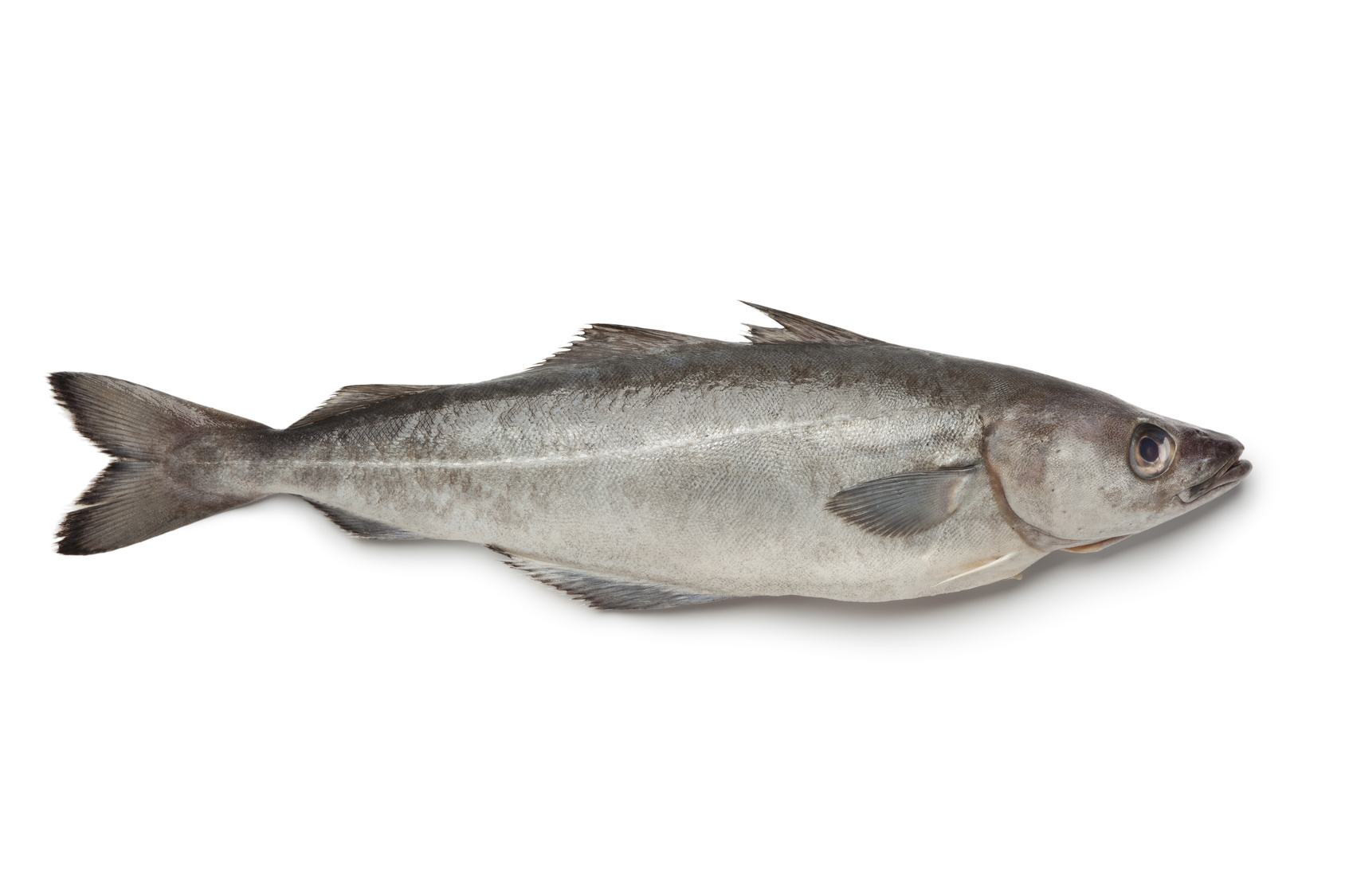 lieu noir poisson nutrition recette santé