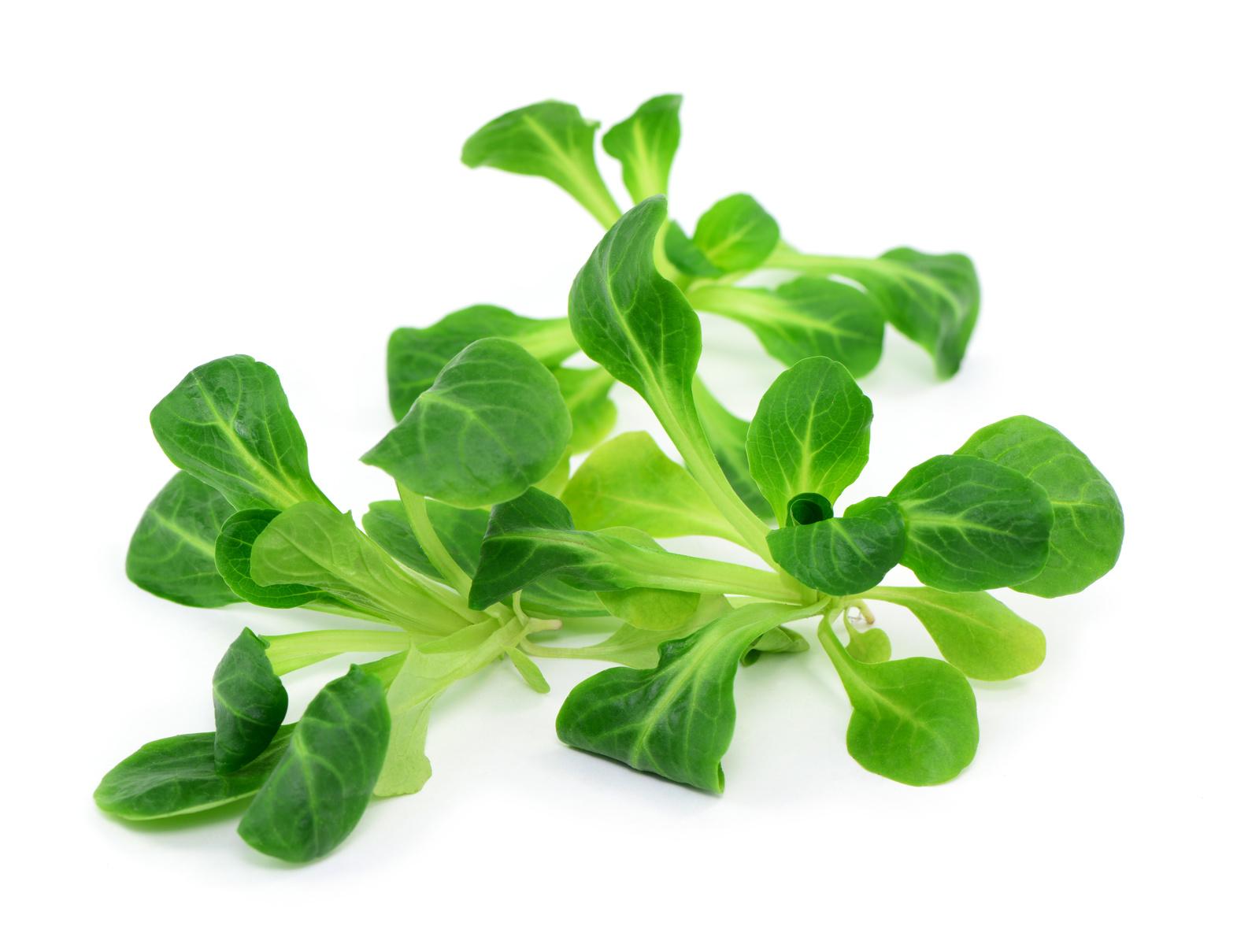 mâche légume nutrition recette santé