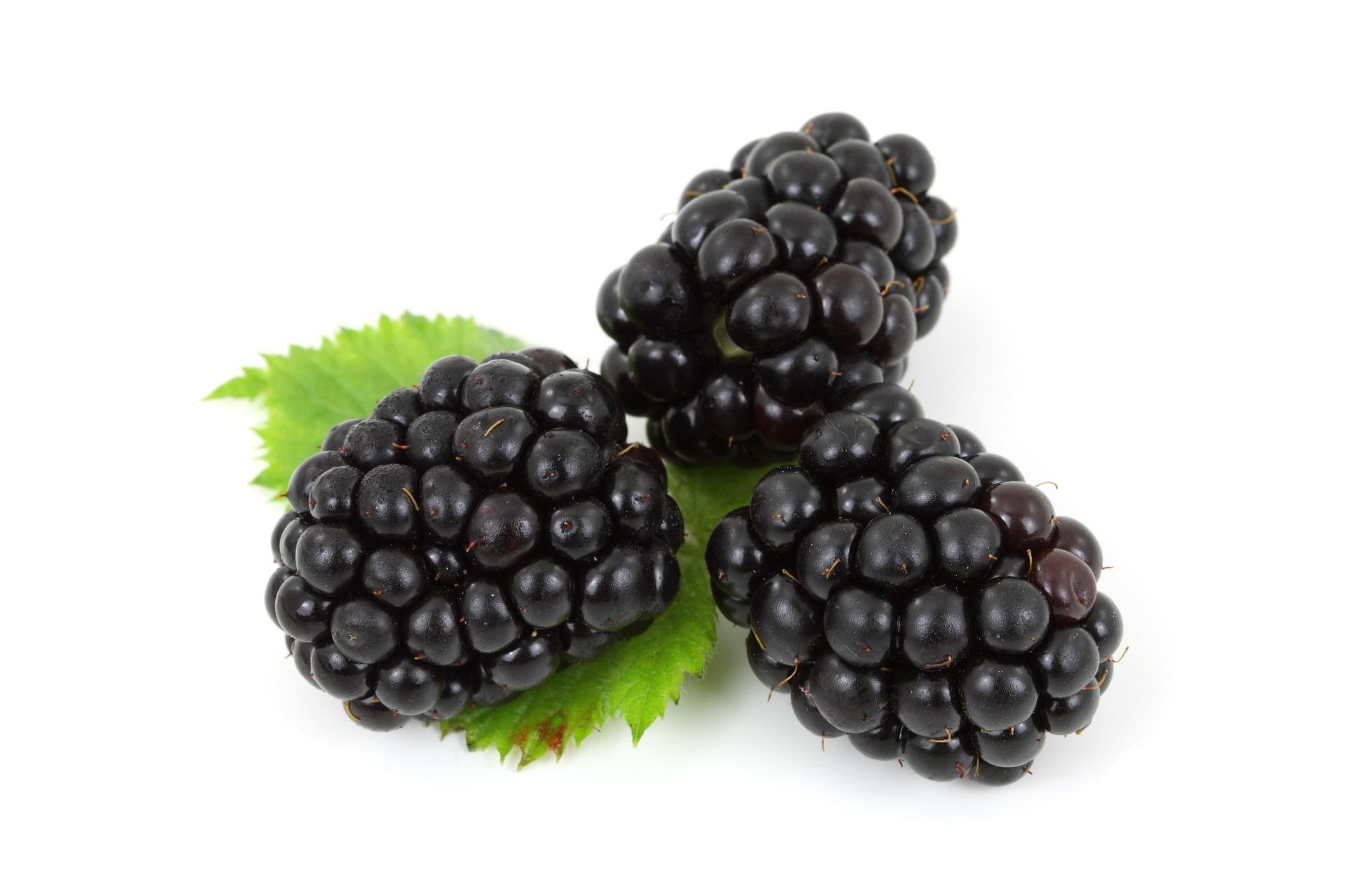 mûre fruit nutrition santé