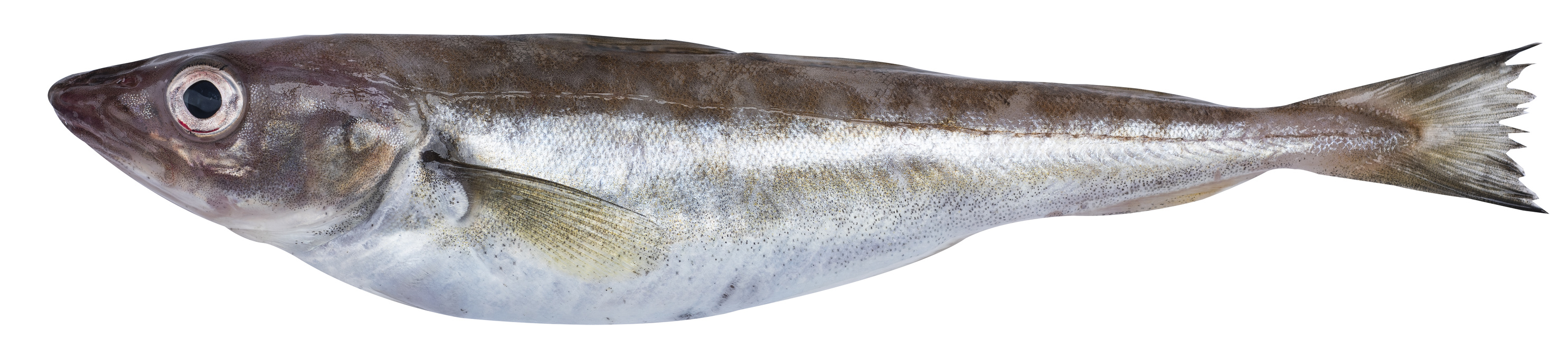 merlan poisson nutrition recette santé