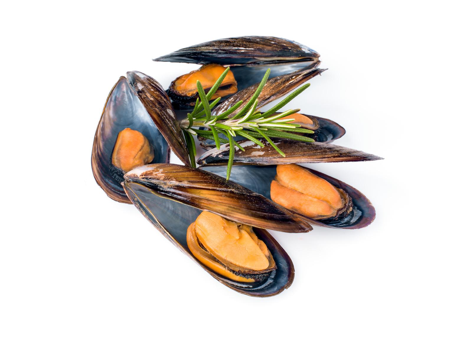moule fruit de mer nutrition recette santé
