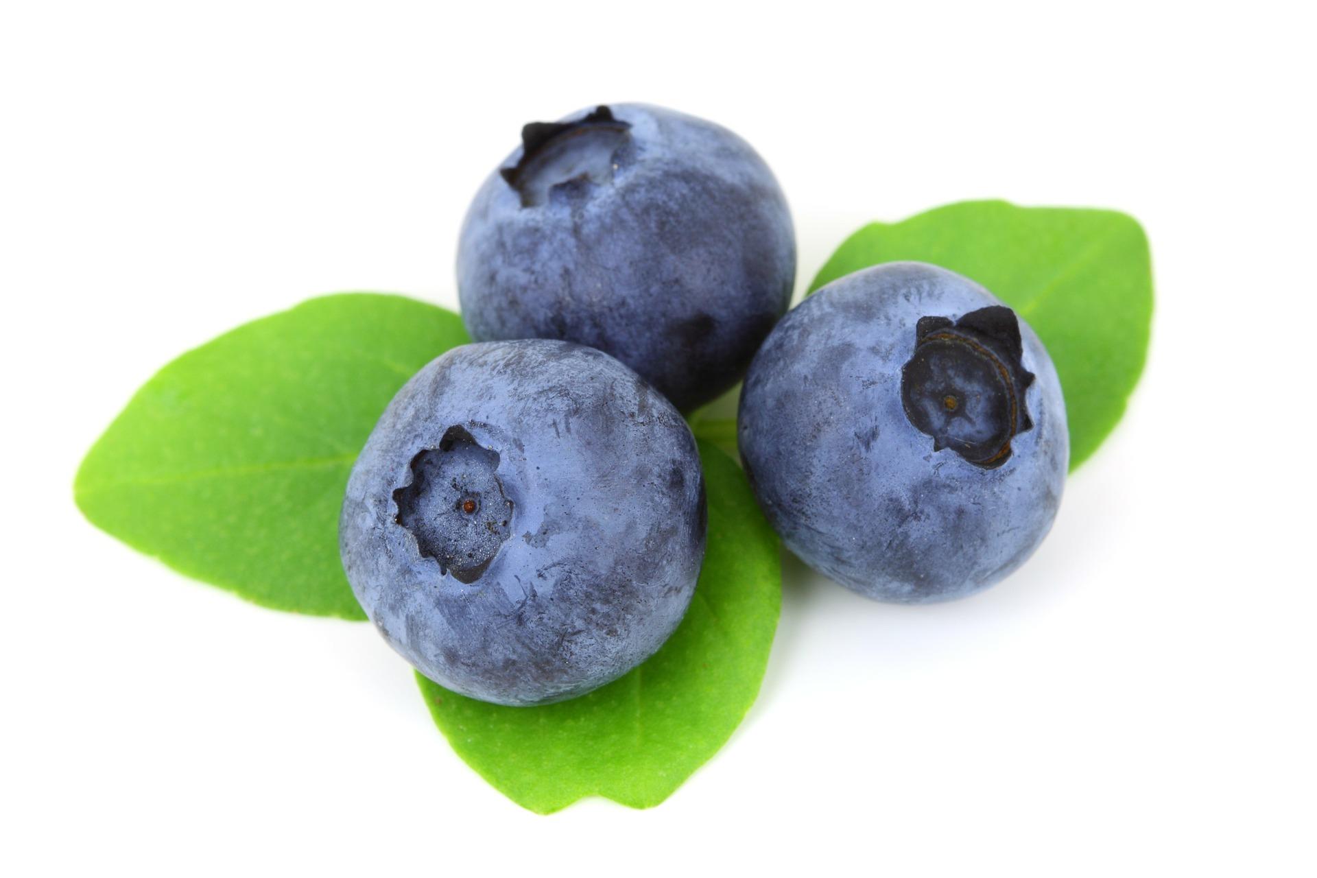 myrtille fruit nutrition santé