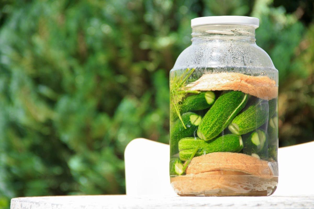légumes fermentés, fenugrec, système immunitaire,