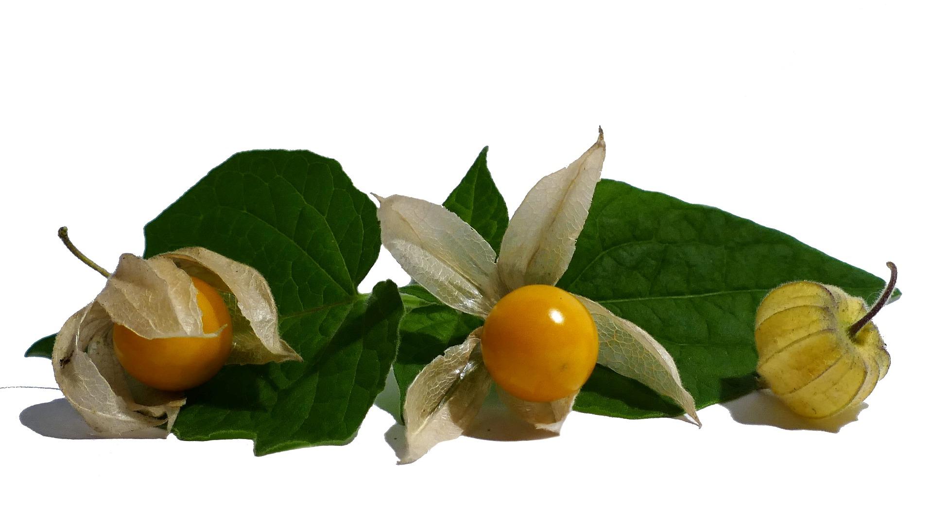 physalis fruit nutrition santé