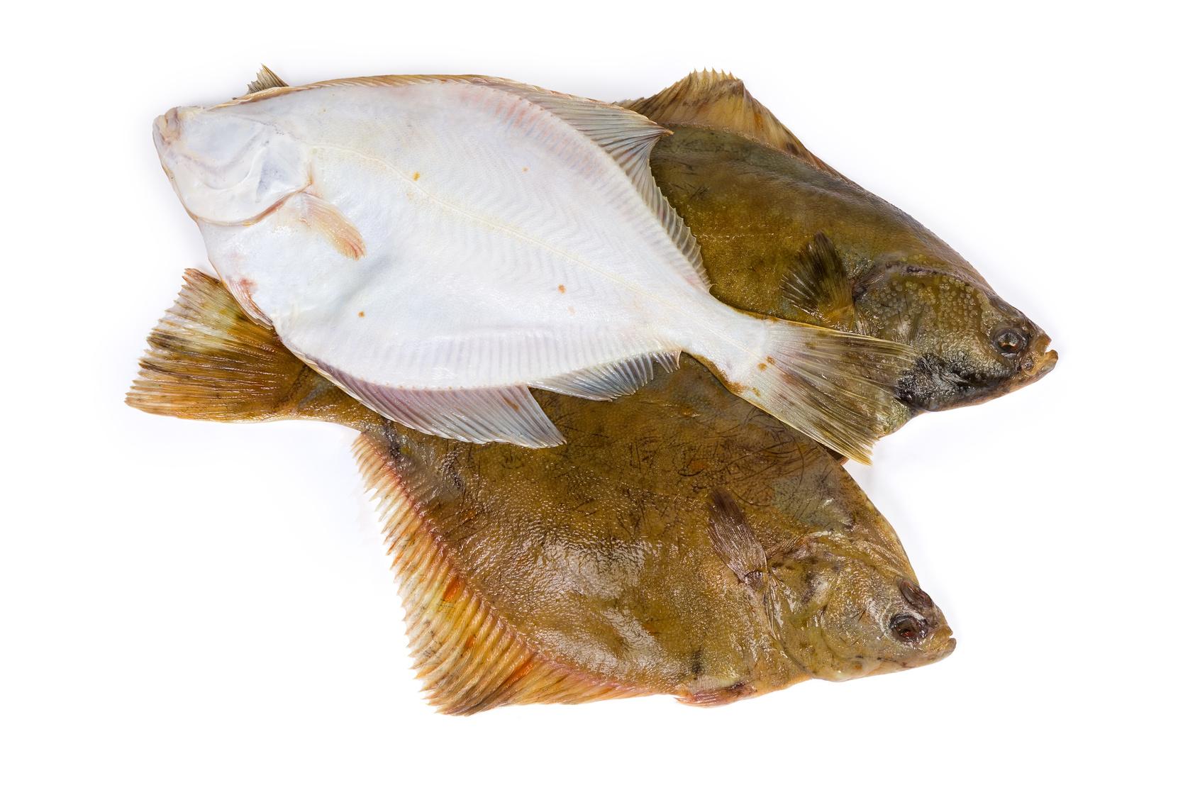 plie poisson nutrition recette santé