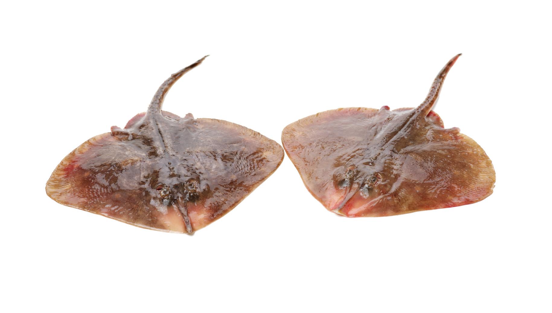 raie poisson nutrition recette santé