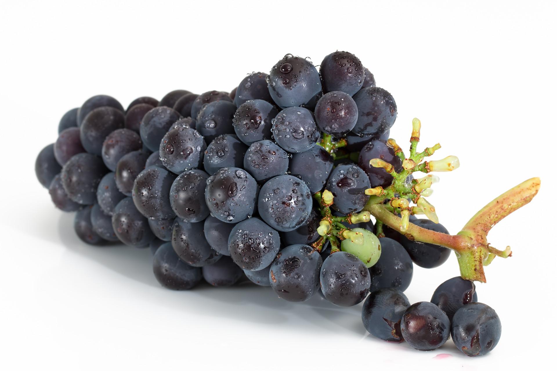 raisin fruit nutrition santé