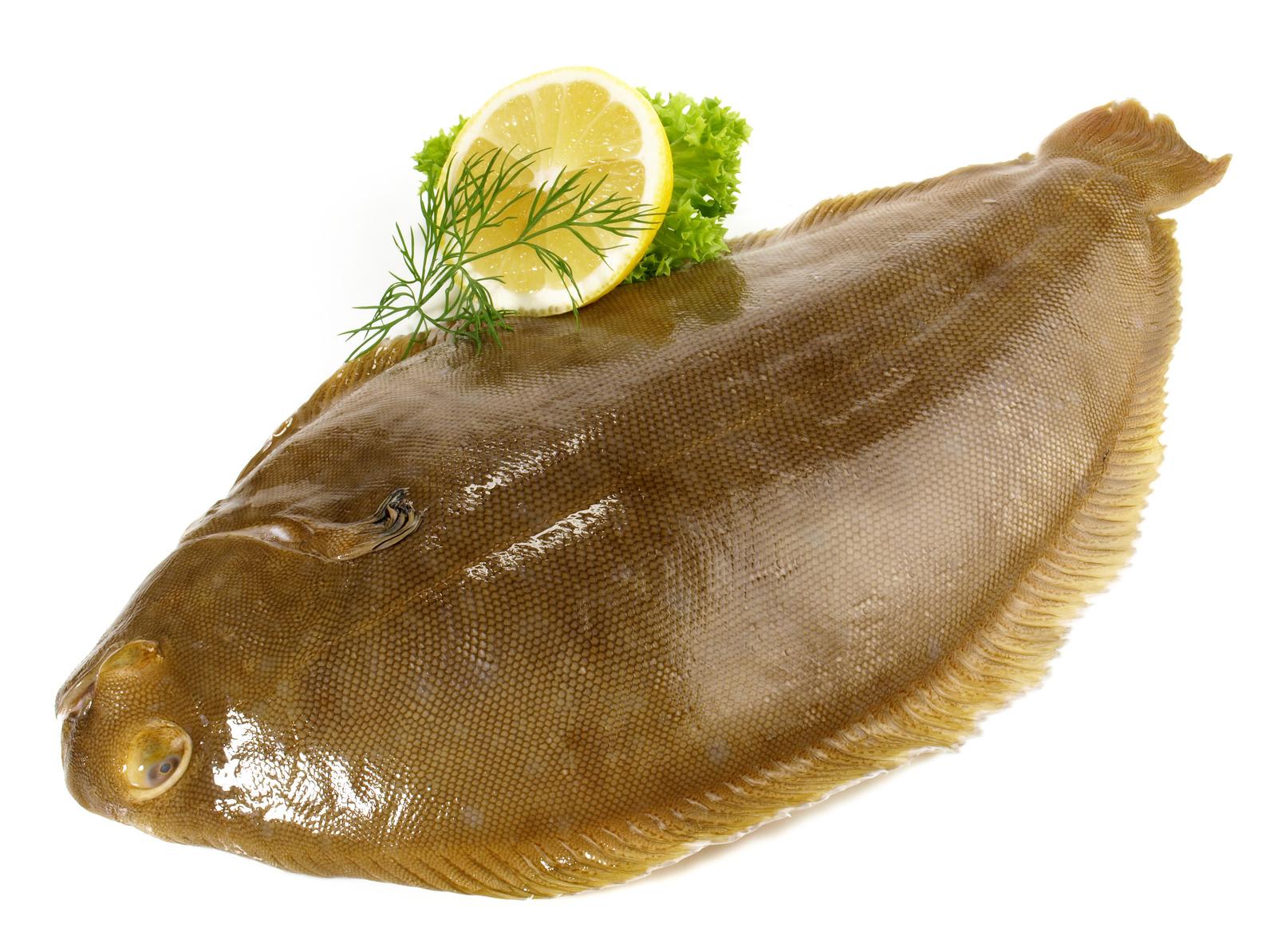 sole de la mer du nord poisson nutrition recette santé