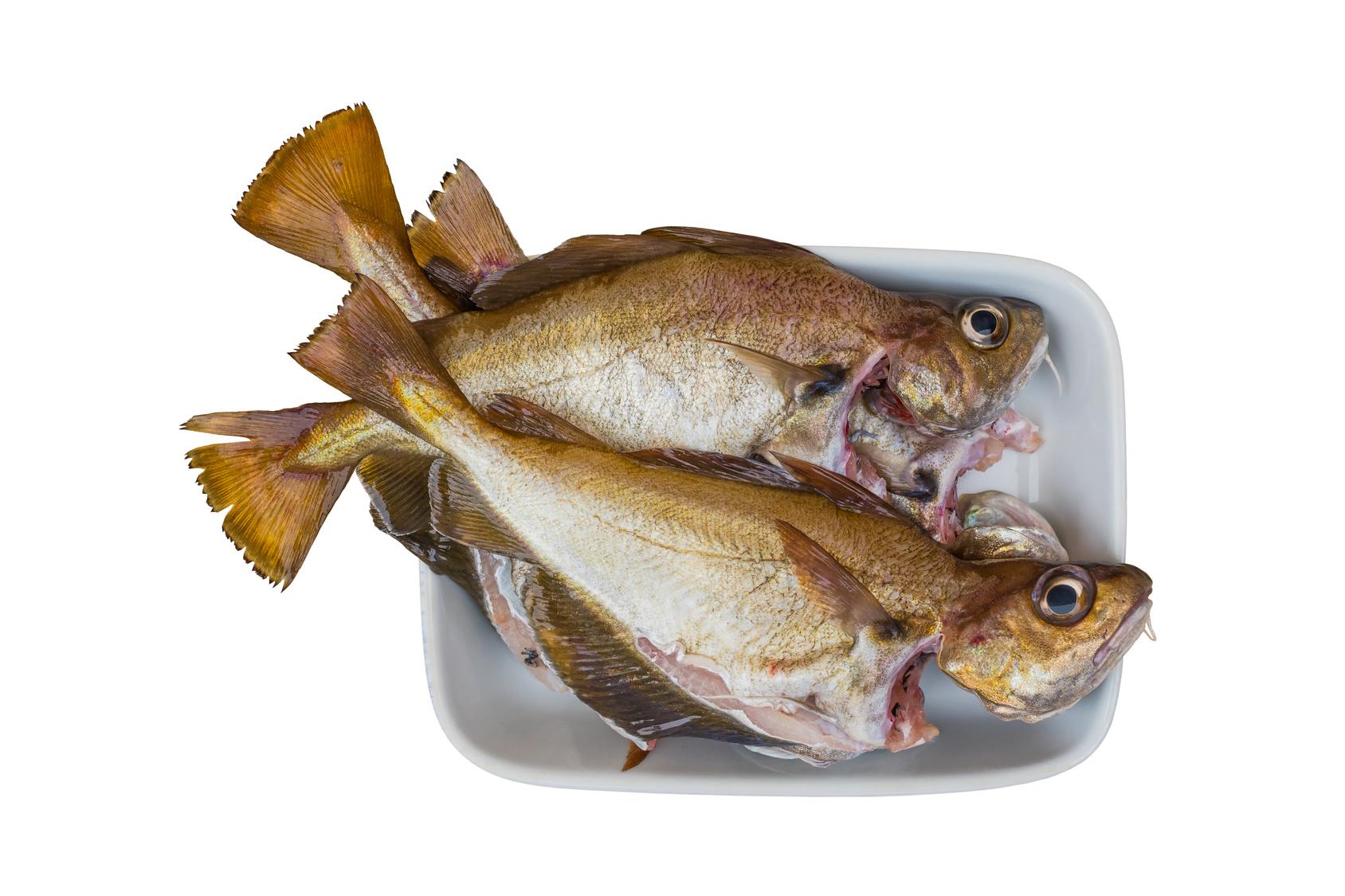 tacaud trisopterus luscus poisson nutrition recette santé