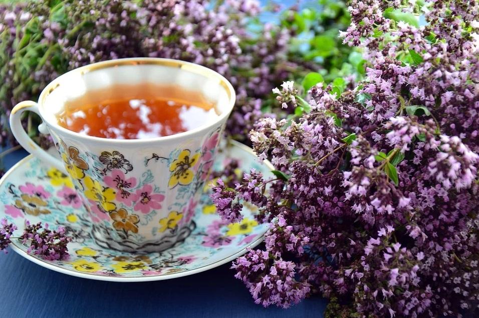 tasse plantes fleur