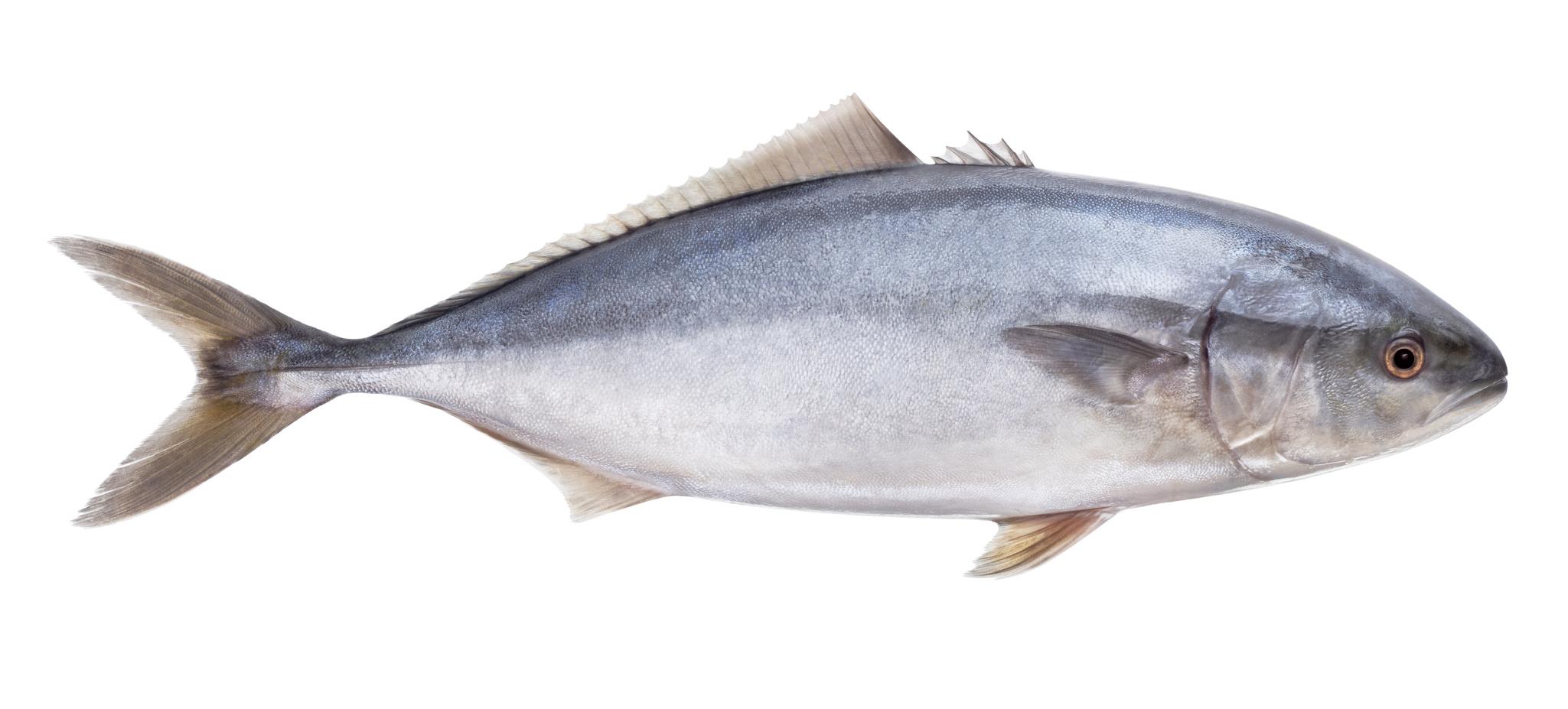 thon poisson nutrition recette santé