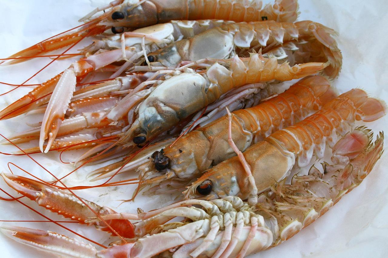 langoustine fruit de mer nutrition recette santé