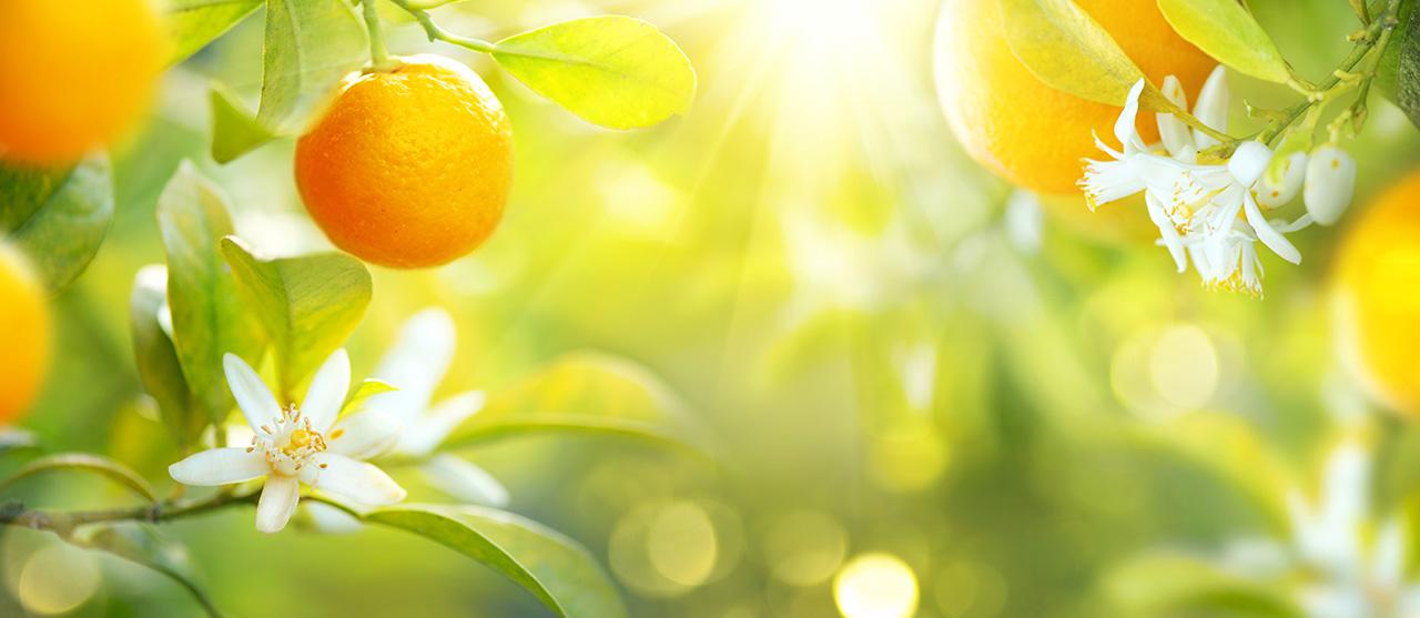 orange fruit nutrition santé