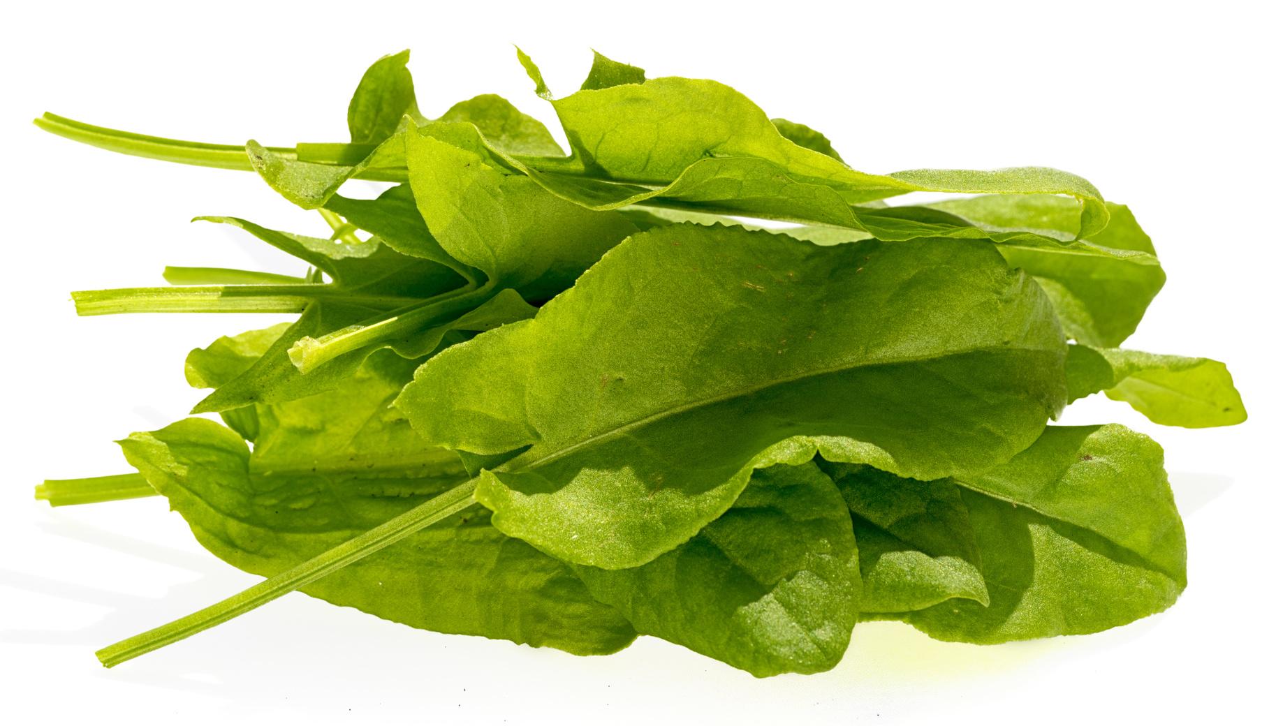 oseille fraîche légume nutrition recette santé