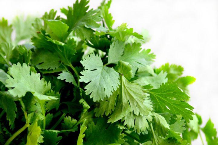 Persil, herbe aromatique
