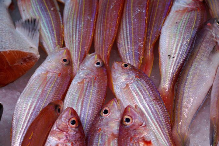 Poisson de mer : riche en iode