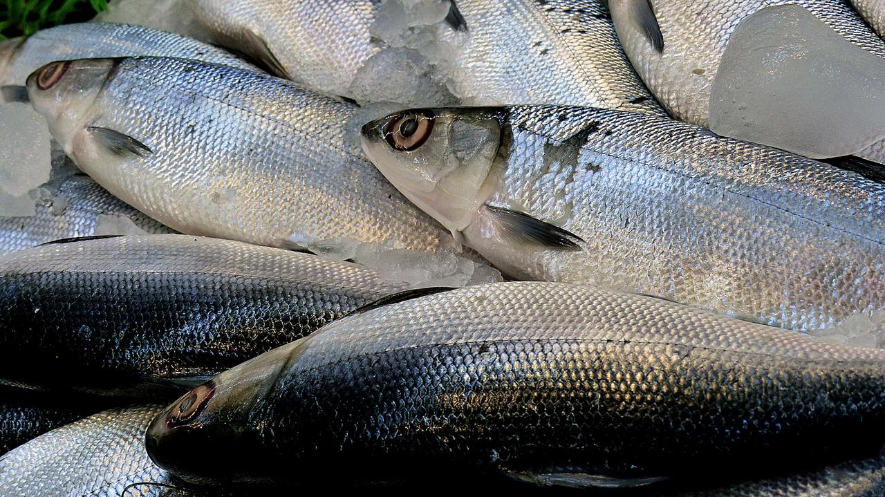 Tout sur le loup de mer le poison nutrition santé