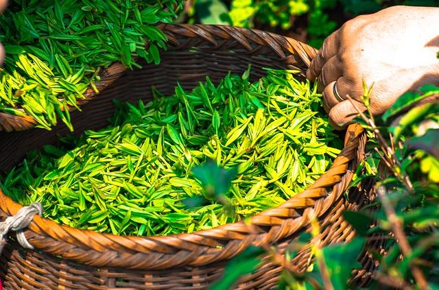 thé bio hydratation